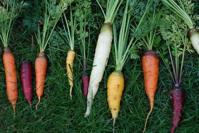 1001-carrots