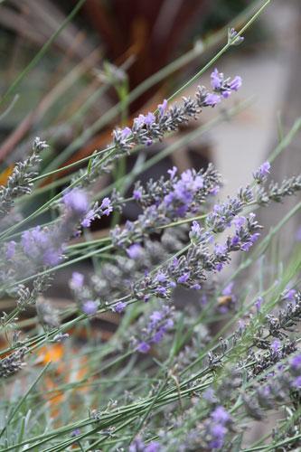 1010-lavender