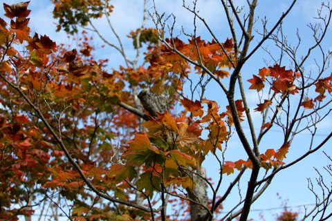 1010-neighbor-tree