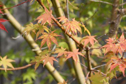 1010-speckled-leaf-close-up