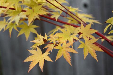 1022-leaves-1