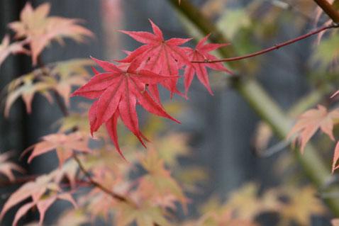 1022-leaves-2