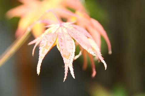 1022-leaves-3