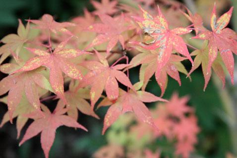1022-leaves-4