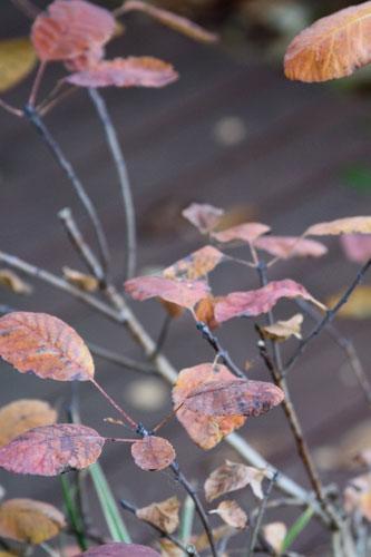 last-of-fall-1