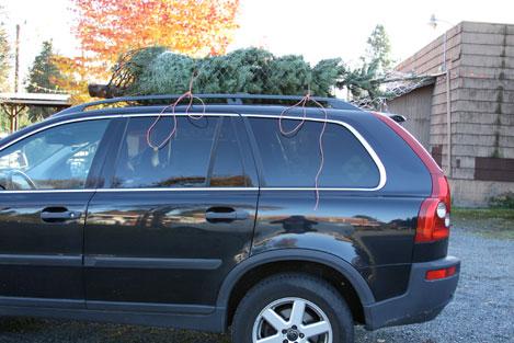 tree-farm-car