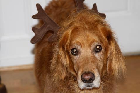 dec-santa-doggy